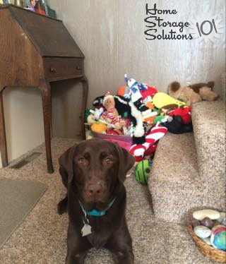 Bella with her pet toys, in a basket {featured on Home Storage Solutions 101}